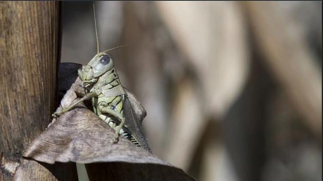 Pentagon virüs yayabilen böcek ordusu kurmak istiyor